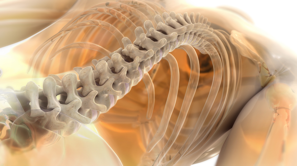 Handling Pain With Chiropractic Adjustments For Spine & Joint Alignment In Darrington